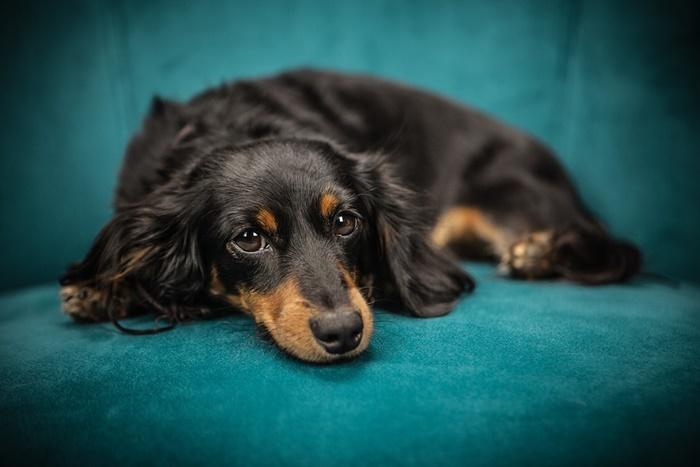 注意!犬のアレルギーの9つの症状