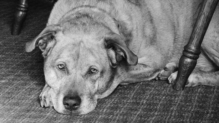 【老犬の餌】高齢なシニア犬におすすめのドッグフード人気ランキング