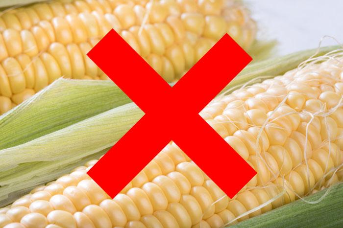 グレインフリーとは?高評判の穀物不使用ドッグフードおすすめランキング