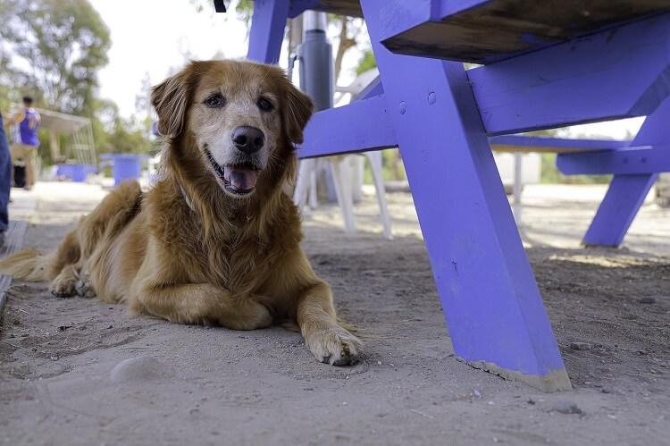 【老犬の餌】高齢シニア犬におすすめドッグフードランキング|柔らかいご飯が人気