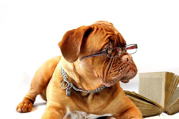 老犬のご飯の量と目安について