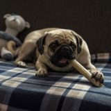 【無添加】安全な犬のおやつ人気ランキング!おすすめ通販メーカー選び方