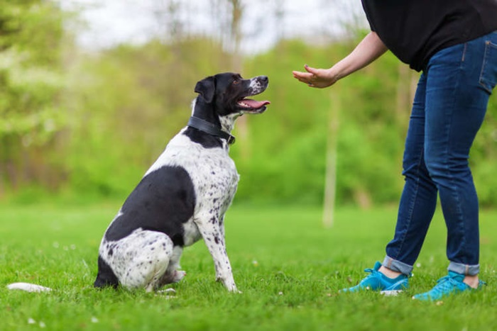 犬の食糞をやめさせたい!食糞対策