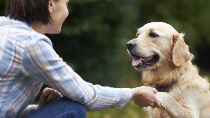 大事なのは自分の愛犬に合った無添加のおやつを選ぶこと!