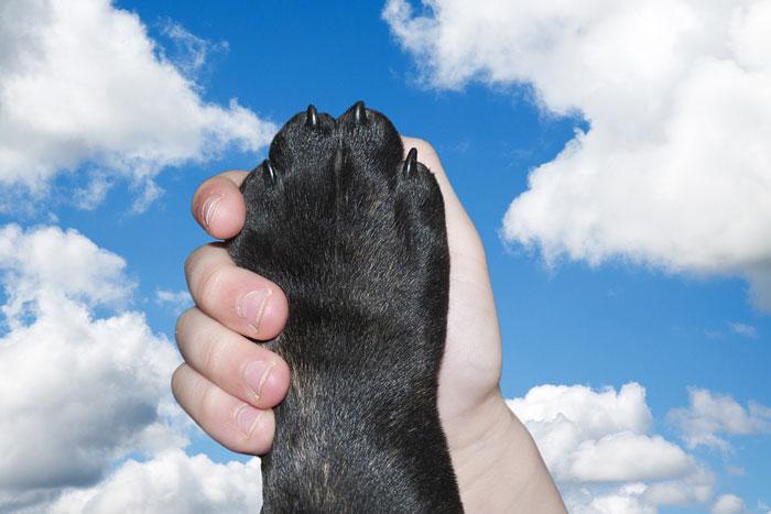 愛犬のしつけにおやつを使用する際の注意点と正しい訓練法まとめ