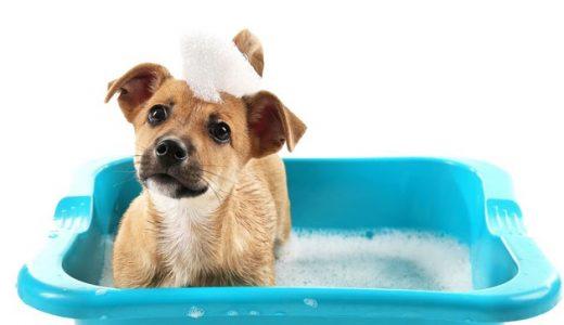 犬の皮膚病&アレルギー性皮膚炎におすすめの薬用シャンプーとやり方とは
