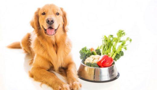 犬に与えてはいけないダメな野菜・果物(フルーツ)&食べもいい食材まとめ