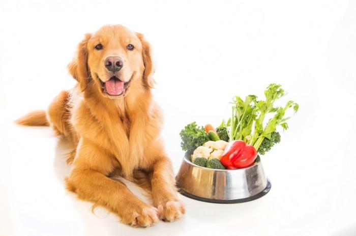犬に与えても大丈夫な野菜