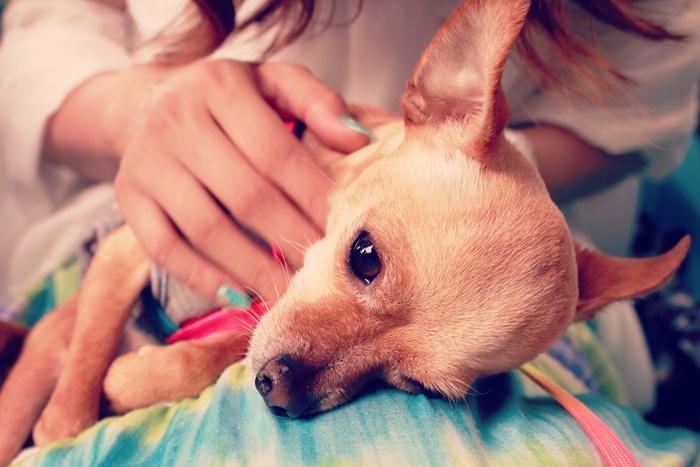 犬が癌になったら食べさせたい食べ物リスト!癌予防と対策