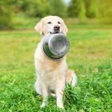 犬の癌予防にいいとされる食べ物&食事療法!療養食に良い食材と正しい対策とは