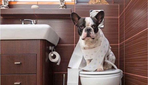 犬の便秘解消にいいドッグフードおすすめ人気ランキング!うんちが出ない時の解消法
