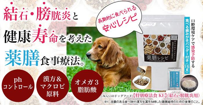 犬の尿路結石に良くない野菜&食べ物!予防に良い食事&対策フードまとめ