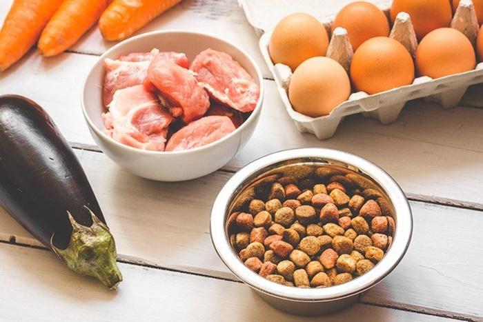 犬に必要な栄養は足りてる?摂りすぎるとよくない栄養素と管理のポイント