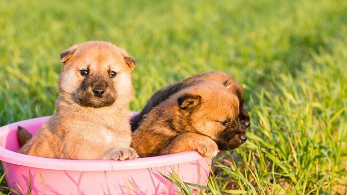 【重要】犬に必要な栄養素は炭水化物・脂質・たんぱく質・ビタミン・ミネラル