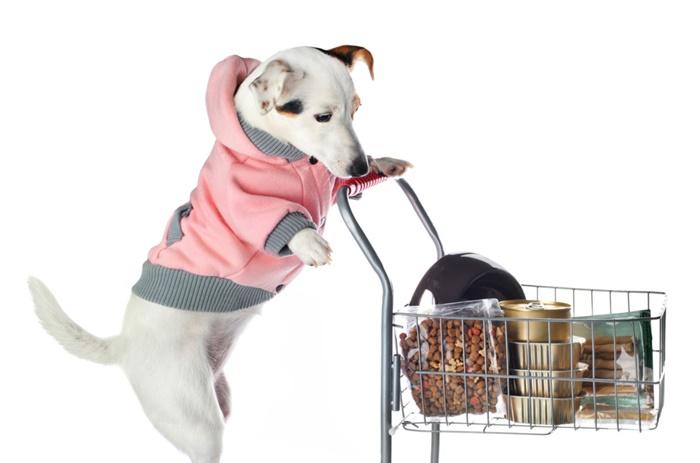 犬が栄養失調になってしまう原因