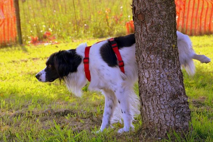 犬の尿路結石の予防に良い食事&対策フードと原因になる食べ物まとめ