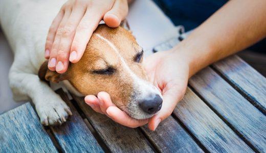 犬が食べ物を吐く原因は病気なの?嘔吐物が茶色・黄色・緑色の時の対処法