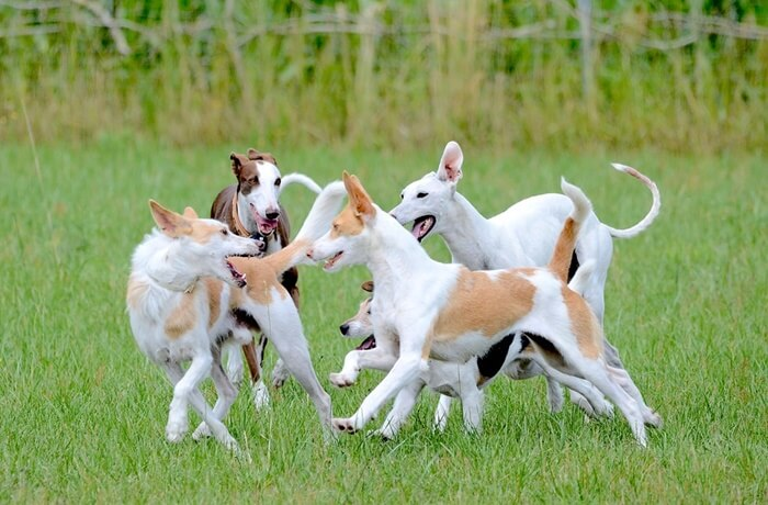 犬の関節痛・関節炎に効くサプリの選び方