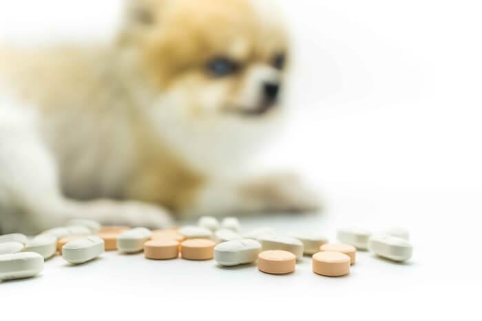 症状別の犬のサプリメントの正しい選び方