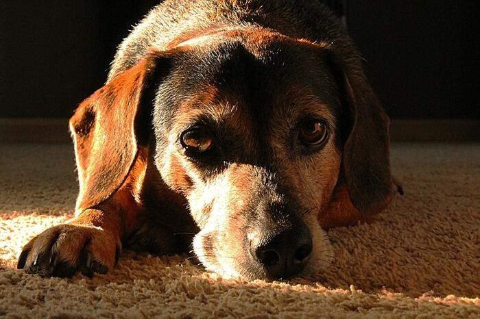 犬の認知症の原因は大きく分けて4つ