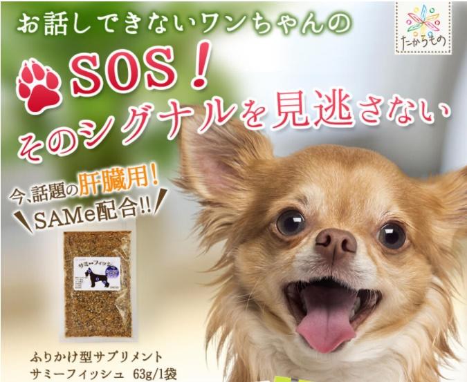 犬の認知症予防サプリメントでおすすめは?ペットのボケ防止効果を比較!