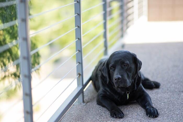 犬の関節トラブルの4つの原因とは