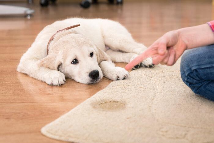 犬の尿漏れサプリメントのおすすめは?お漏らしの原因と正しい尿失禁対策