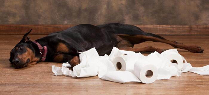 犬が尿漏れを起こす原因について