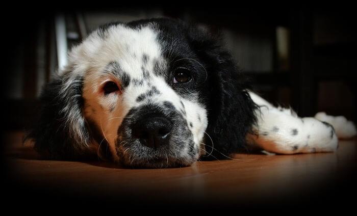 犬の関節トラブルの症状・4つのサインとは