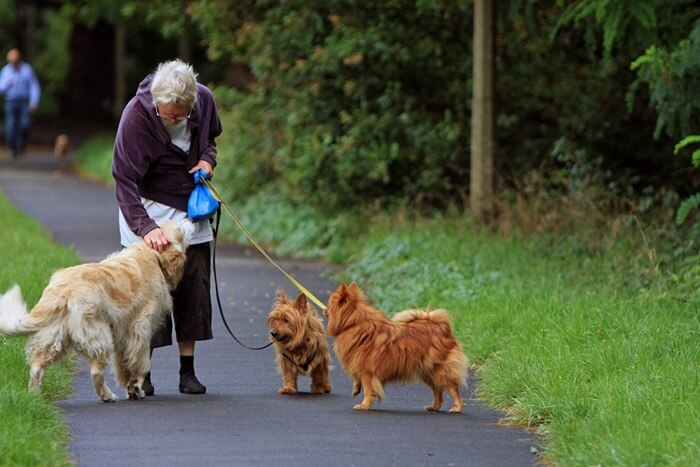 犬の認知症の正しい予防法とは