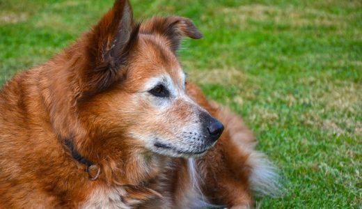 犬用関節サプリおすすめ比較ランキング!関節痛にはグルコサミンが効果的