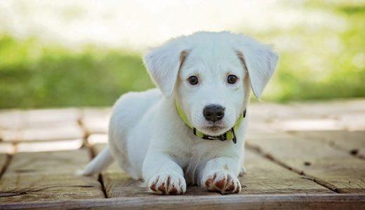 犬のサプリメントの効果とおすすめの選び方!ペット・ドッグサプリを比較