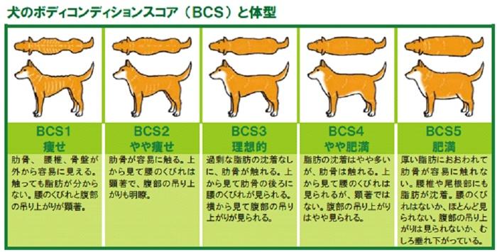 犬の体型指標BCS