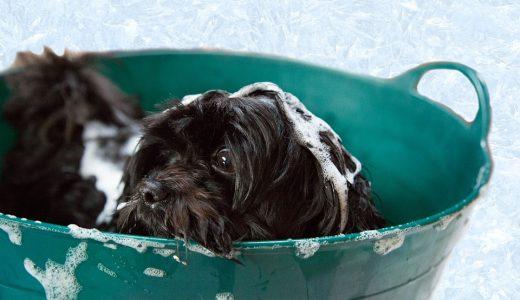 愛犬の体臭&口臭を消すドッグフードおすすめランキング!犬の臭いの原因と対策