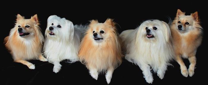 飼いやすい人気の小型犬ランキング!初心者にもおすすめ
