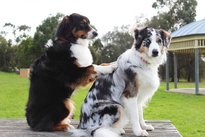 犬の便秘ツボマッサージを行ってウンチを促そう