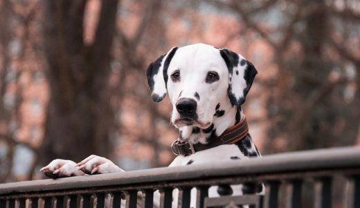 アレルギー対応ドッグフードおすすめランキング!低アレルゲンの犬用の餌