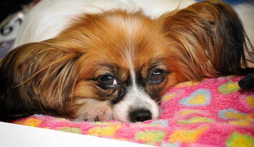 嘔吐しやすい犬におすすめドッグフードランキング!餌を吐く原因と対策