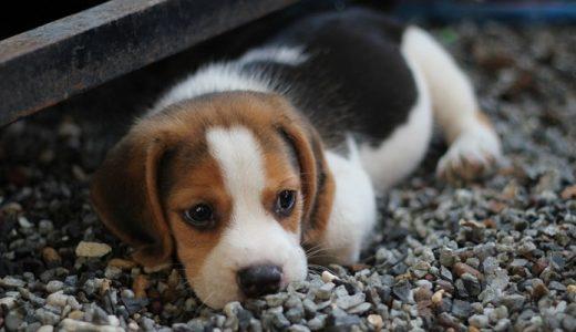 犬の名前ランキング!ドイツ語やフランス語、和風な名前も人気