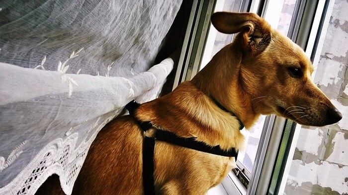 老犬になって介護が必要になったら?知っておきたい介護事情