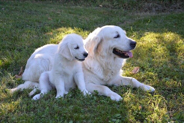 子犬と母犬の食糞は大丈夫
