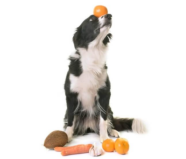 犬はみかんを食べても大丈夫だけど皮はだめ!与えていい量と注意点