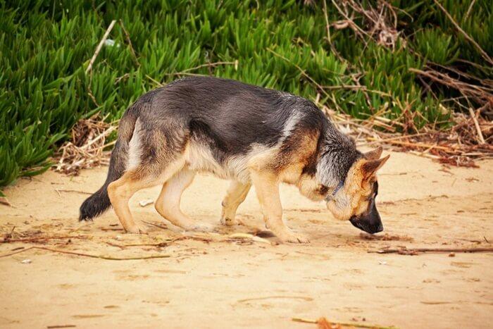 犬の食糞による影響