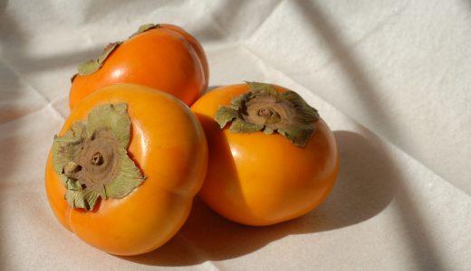 犬は柿を食べても大丈夫!栄養価が高いけど渋柿や未熟柿には注意