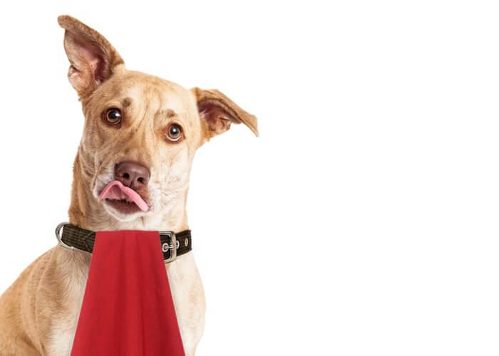 犬の食糞の10個の原因