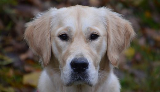 犬の下痢におすすめのサプリランキング!原因と対処法とサプリの選び方