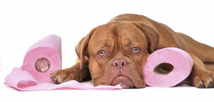 犬の便秘におすすめのサプリランキング!原因と解消法とサプリの選び方