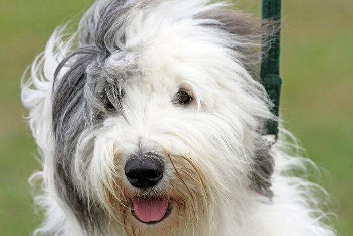 犬の毛艶を改善するサプリメントおすすめランキング|毛並みの悪化の原因と治し方