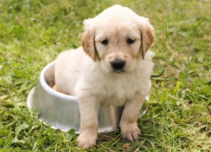 犬に善玉菌を与えお腹の調子を整える!おすすめ乳酸菌サプリランキング
