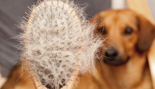 抜け毛対策ドッグフードおすすめランキング!犬の抜け毛の原因と改善方法